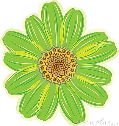 Green Daisy Flower Stock Photography - Image: 14800942