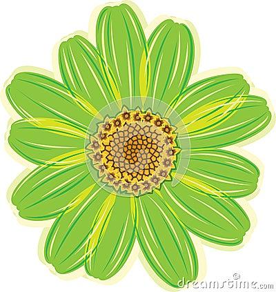 Green daisy flower