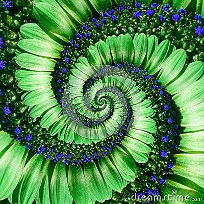 Free Green Daisy Flower Spiral Abstract Fractal Effect Pattern Background. Green Navy Flower Spiral Abstract Pattern Fractal. Incredibl Stock Image - 105117221