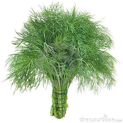 Free Green Dill Stock Photography - 23507692