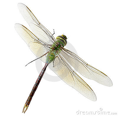 Free Green Dragonfly Stock Photo - 6220330