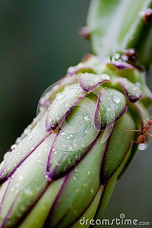 Green dragonfruit leaves