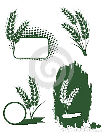 Free Green Ears Of Wheat Stock Photo - 25533300