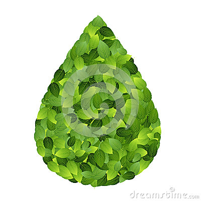 Green eco friendly label from green leaves. Vector