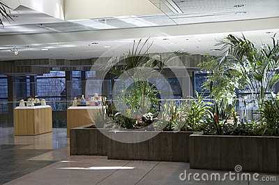 Green eco office building interiors natural light for Office plants no natural light