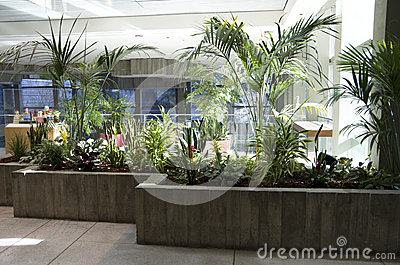 Green eco office building interiors natural light stock for Office plants no natural light