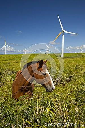 Green Ecology, wind turbines & horse