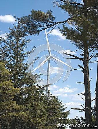 Green Energy Forever