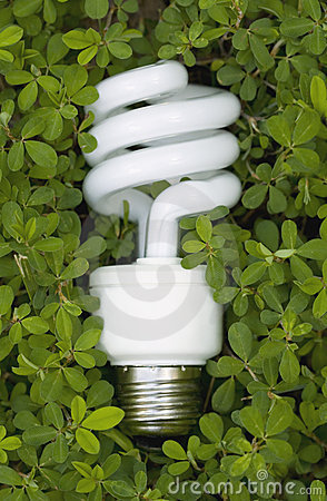 Free Green Energy Saving Light Bulb Stock Images - 5462804