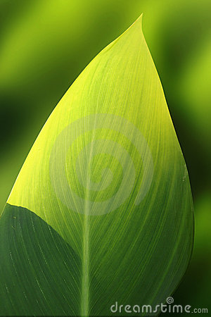 Green Exotic Leaf Royalty Free Stock Photos - Image: 3199718
