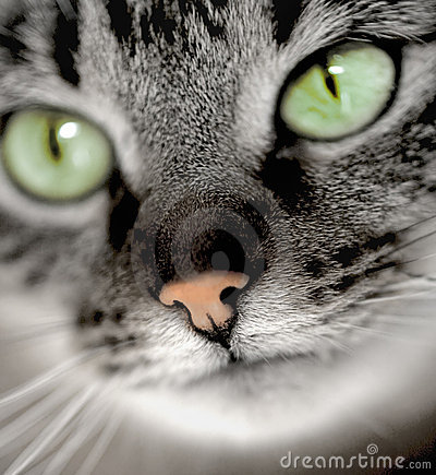Free Green-eyed Cat Stock Images - 14117494