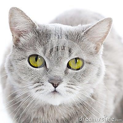 Free Green Eyed Cat Stock Image - 30653251