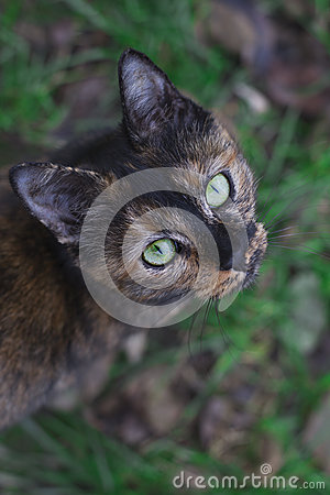 Free Green-eyed Cat Looking Up Stock Image - 64651271