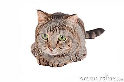 Green-eyed cat on White