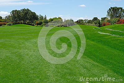 Green fairway
