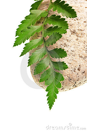 Free Green Fern And Stone Royalty Free Stock Image - 8728346