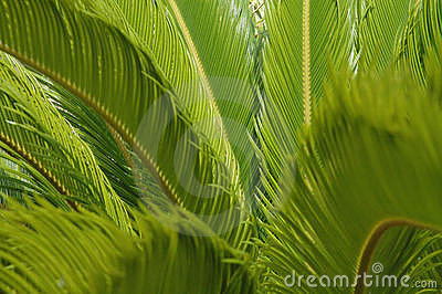 Green fern background - horizontal
