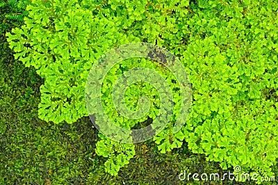 Green fern backgrounds.
