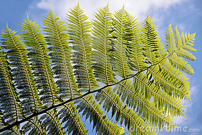 Green fern with blue sky