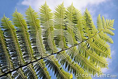 Green fern with blue sky