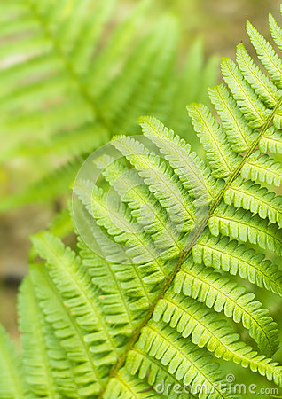 Green Fern Leave