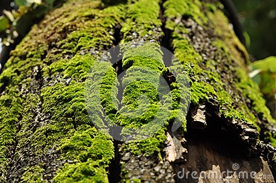 Green fern on the rotten bark