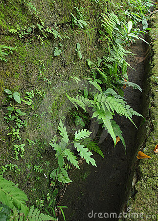 Green ferns on old wall