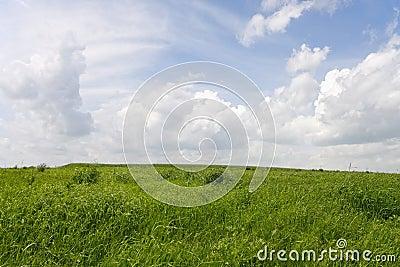 Green fiel