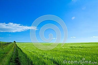 Green field 6