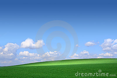 Green field with a background of the blue sky and