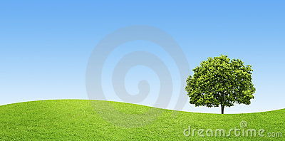 Green field with a big tree on blue sky background
