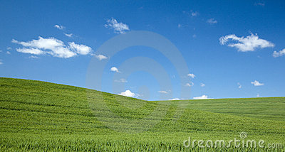 Green Field on a Blue Sky Summer Day