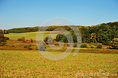 Green field and forest