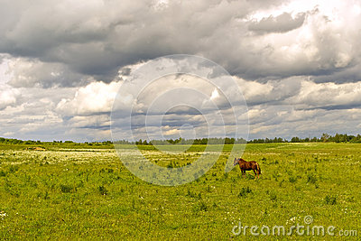 Green field with a horse