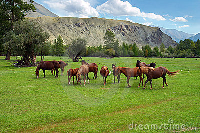 Green field, mountains and horses