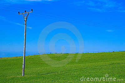Green field and power line pole