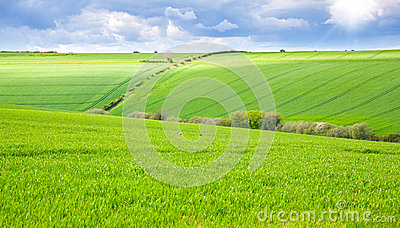 Green field with rabbits