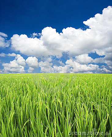 Free Green Field, Sky And Clouds Royalty Free Stock Images - 3602959