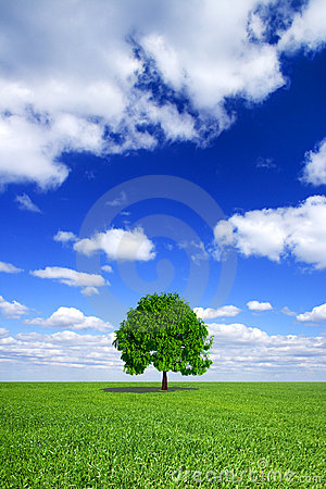 Green field, sky, lonely tree