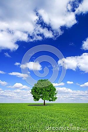 Green field, sky, lonely tree