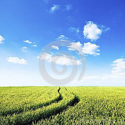 Green field with tractor trails