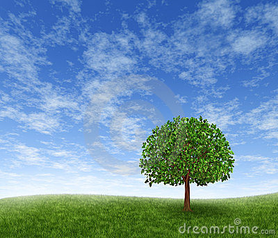 Green Field And Tree