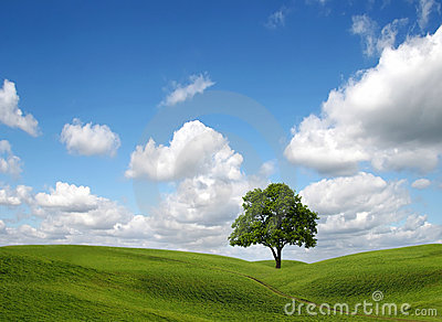 Green field and tree under blue sky