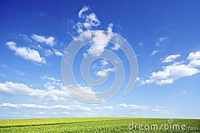 Green field under big sky