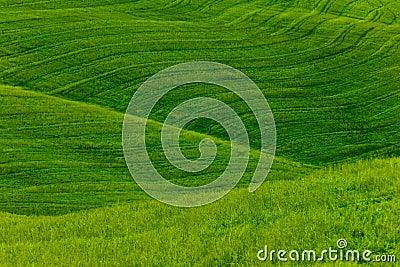 Green Fields Background