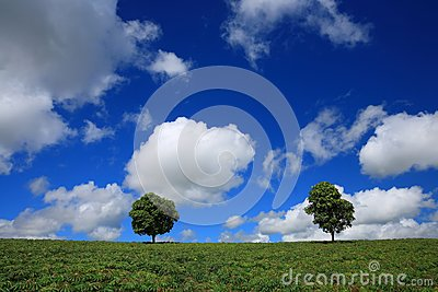 Green fields, the blue sky and trees