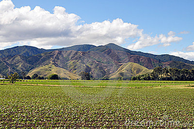 Green fields and hills of Wairau Valley