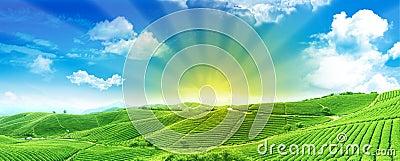 Green fields at sunrise