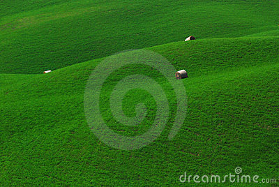 Green Fields in Tuscany