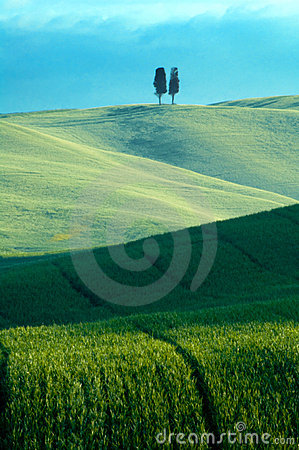 Green Fields Of Wheat Stock Photography - Image: 7440672
